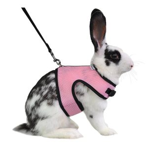 Best Rabbit Harness – Top 4 Harnesses Reviewed